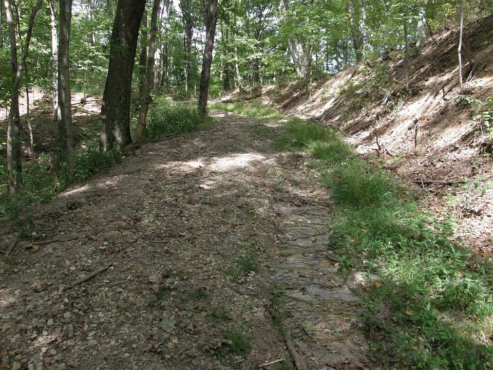 A rocky trail surrounded by trees