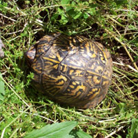 Try looking on the forest floor for a box turtle.