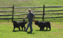 Visitor walking his dogs along a fence at Hopewell Furnace.