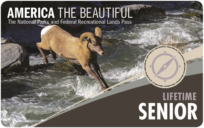 Front of the Lifetime Senior Pass. Photo features a bighorn sheep leaping over a brook.