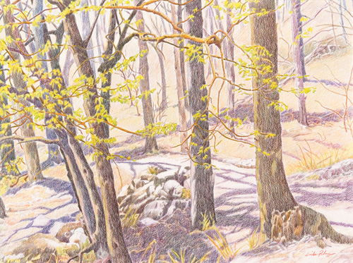 Prismacolor pencil piece of a group of small trees in the spring, mostly trunks, but with light yellow-green leaves on some with long shadows