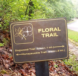 Floral Trail sign, dark brown metal with gold lettering