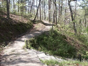 View of a wooded graveled trail with steps leading downhill on the right.