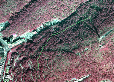 portion of infrared aerial photo of park with Honeysuckle Trail drawn in green