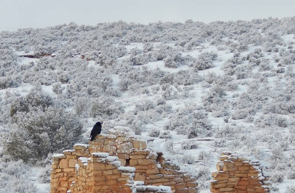 raven sitting on ruins in the foreground and snow-covered scrub land in the background