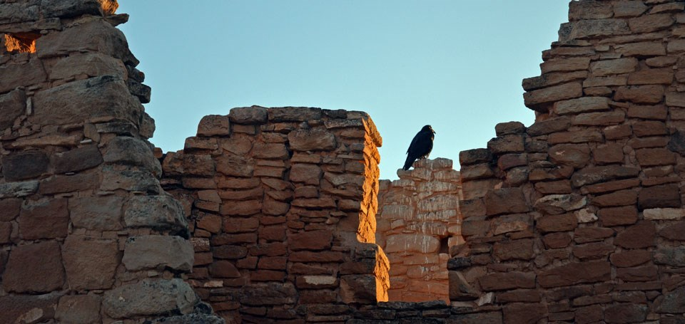 raven perched on Hovenweep Castle at sunset