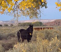 Rambo, one of two park horses at Hubbell Trading Post