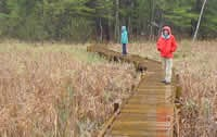 A boardwalk built by volunteers allows hikers to enjoy a weltand on a rainy afternoon.