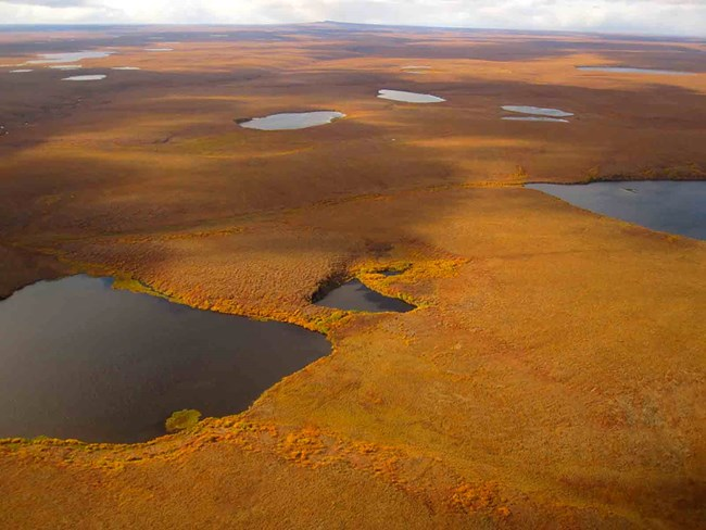 An aerial view of the tundra in fall color and lakes in BELA.