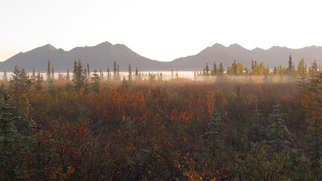 Boreal or taiga forest and shrublands.