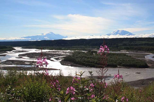 Overlooking the braided Copper River, fireweed in the foreground.