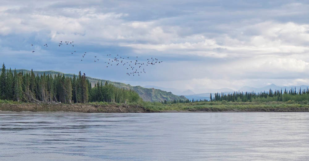 The Yukon River in the fall. A large river with islands and forested uplands.