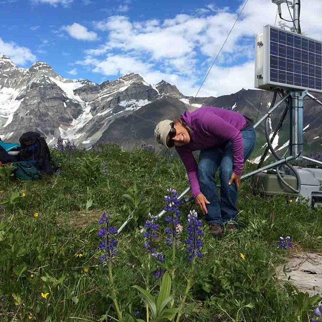 A climate station high in the mountains in summer.