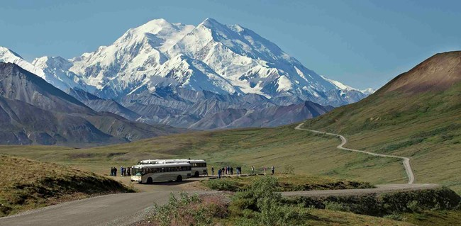 Buses with visitors view Denali peak.