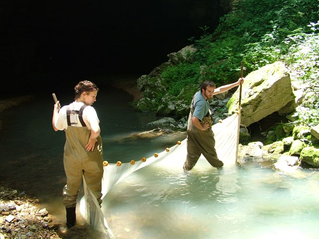 University of Tennessee researchers sampling fish in Entrance Spring to Russell Cave.