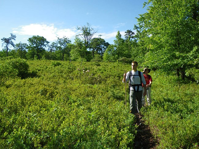 Two people hike along a trail through a clearing