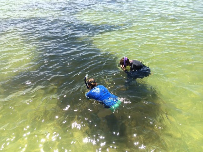 field crew monitoring seagrass for Gulf Coast Network