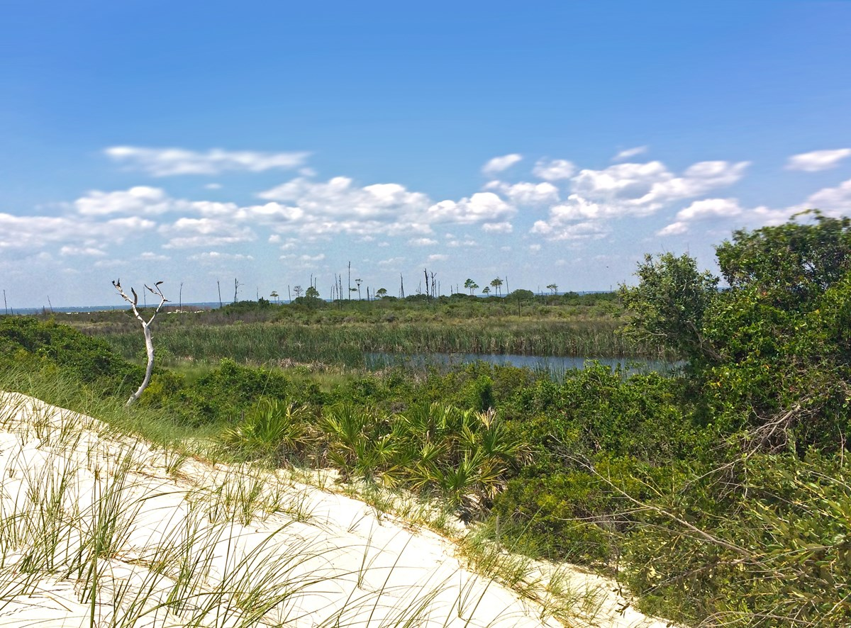 Wetland on the interior of Horn Island, Mississippi
