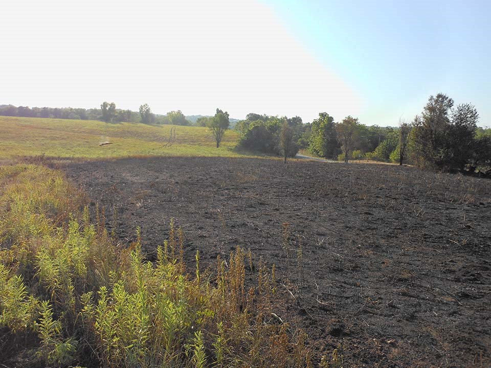 Field at Wilson's Creek National Battlefield after prescribed fire.