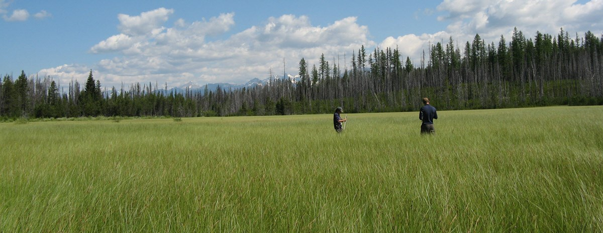 Park staff in a field of grass with trees and mountains in the background