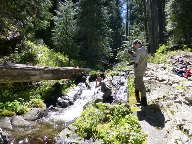 Field technicians next to a small stream at Oregon Caves NMP