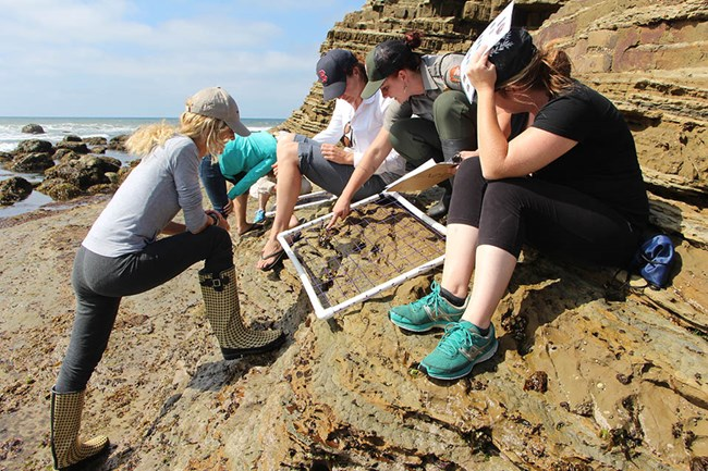 Uniformed staff person pointing out a rocky intertidal organism in a monitoring grid as other people look on.