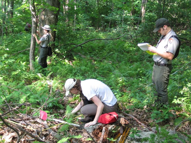 Team of people in the forest performing a variety of vegetation monitoring tasks.