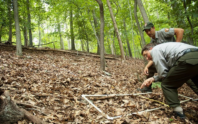 Two staff members examine a monitoring plot on the forest floor, in a forest without an understory