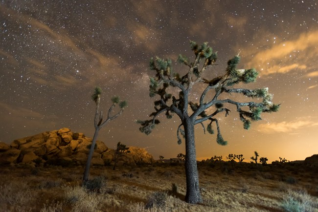 Night sky at Joshua Tree National Park with a Joshua Tree in the foreground and granite boulders in the background