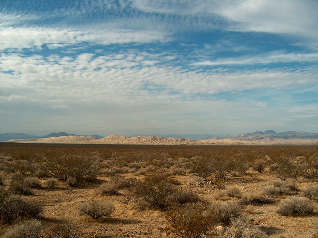 sand dunes stretch across the backdrop of desert landscaping below a sky littered with white clouds