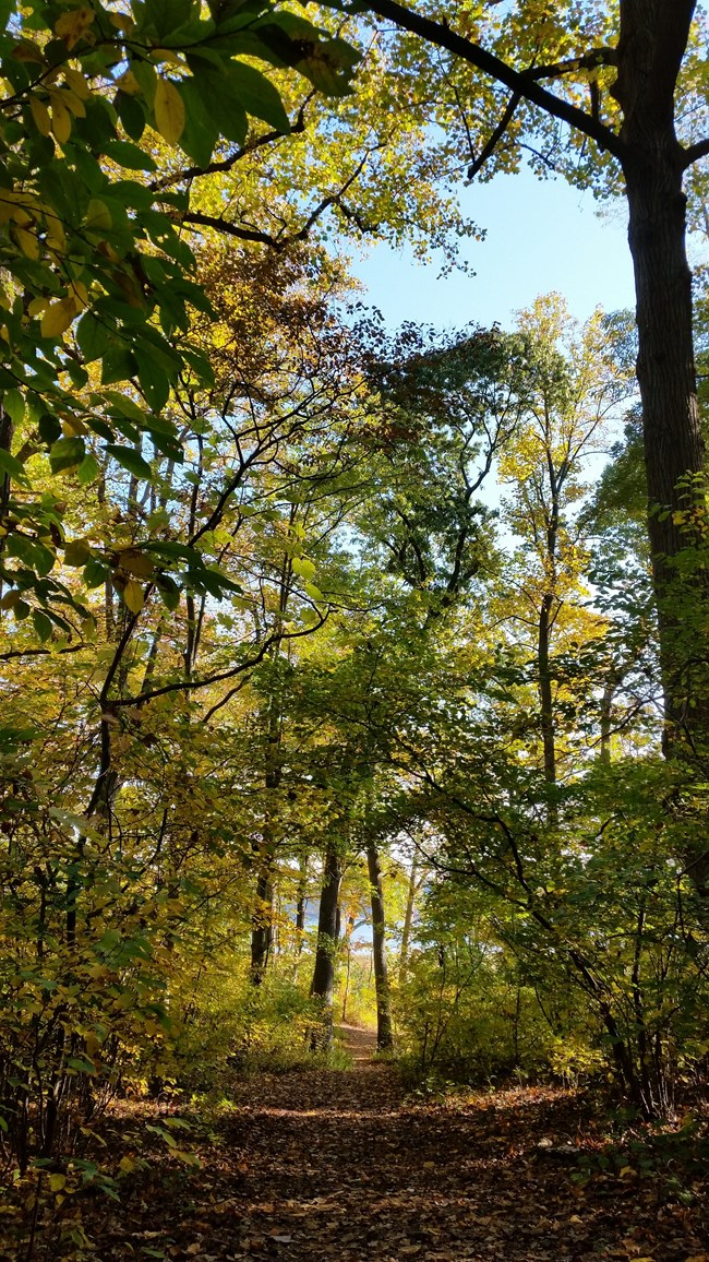 Forest trail at Sagamore Hill National Historic Site