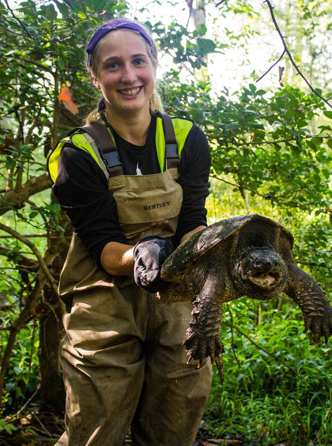 an inventory crew member holds up a snapping turtle