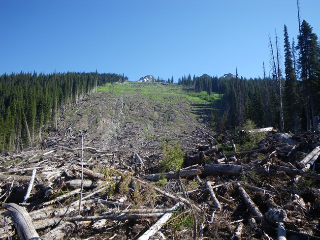 View of a mountainside with avalanche path down the middle and dead trees piled up at the bottom