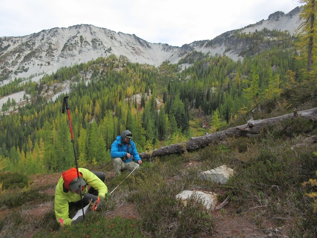 Two people kneeling in subalpine plot counting seedlings with vegetation in fall colors in background