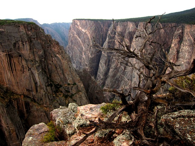 Steep canyon walls with tree skeleton in foreground