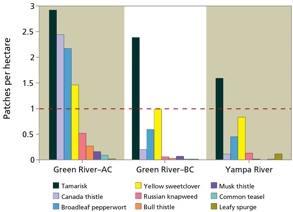 Graphic showing patches of invasive plants per hectare on the Green and Yampa rivers