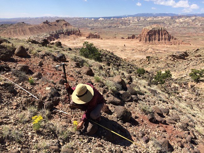 Person in hat crouches to ground, looking closely at plant transect