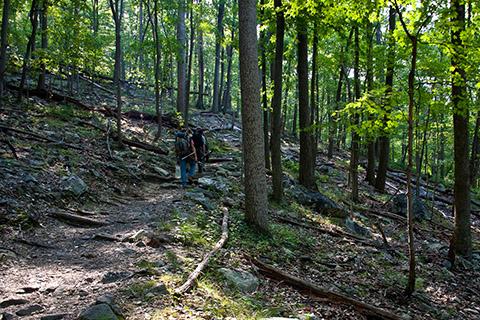 Eastern Deciduous Forest (U.S. National Park Service)