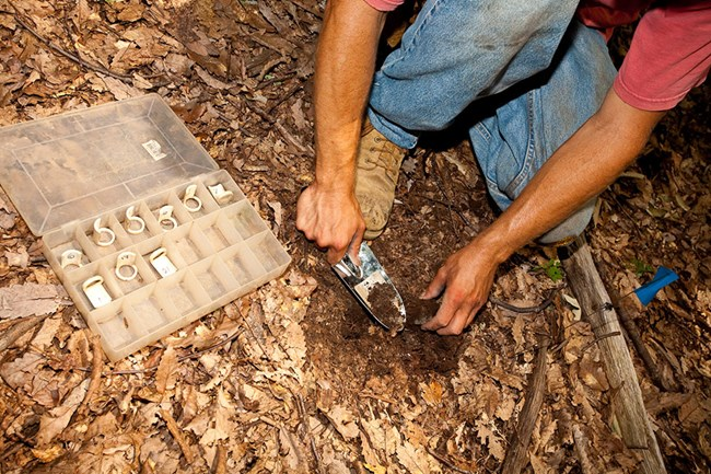 A man kneels to dig a small hole with a trowel in the forest floor.