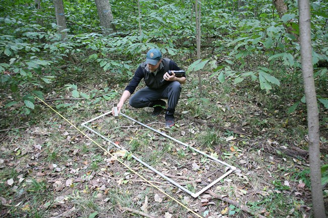 In the woods, a man crouches to examine small plants.