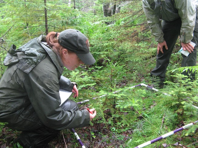 Forest health monitoring in Acadia