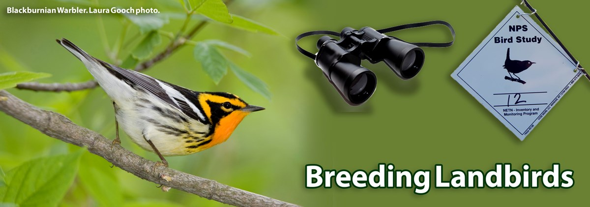 A Blackburnian Warbler perches on a branch on the left. A pair of binoculars and a bird monitoring sign hover over the banner on the right.
