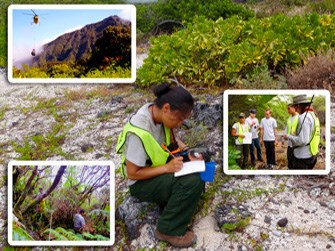 The vegetation crew working in Pacific island parks