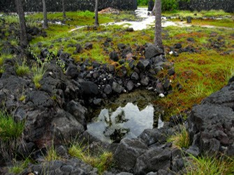 An anchialine pool at Pu'uhonua o Hōnaunau National Historical Park