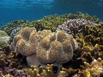 Vibrant coral reef at War in the Pacific National Historical Park