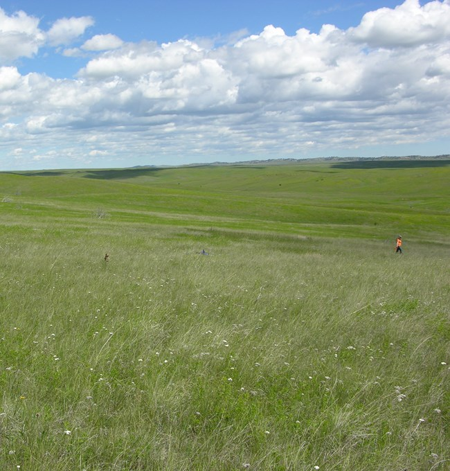 Upland Vegetation and Soils monitoring in Little Bighorn Battlefield National Monument