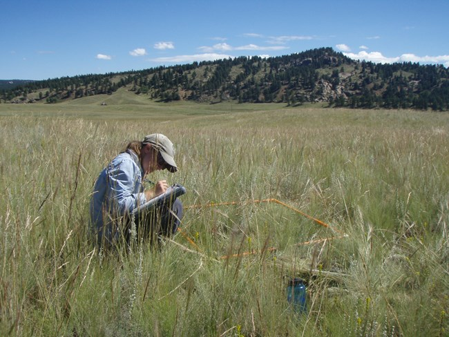 Upland Vegetation & Soils monitoring at Florissant Fossil Beds National Monument