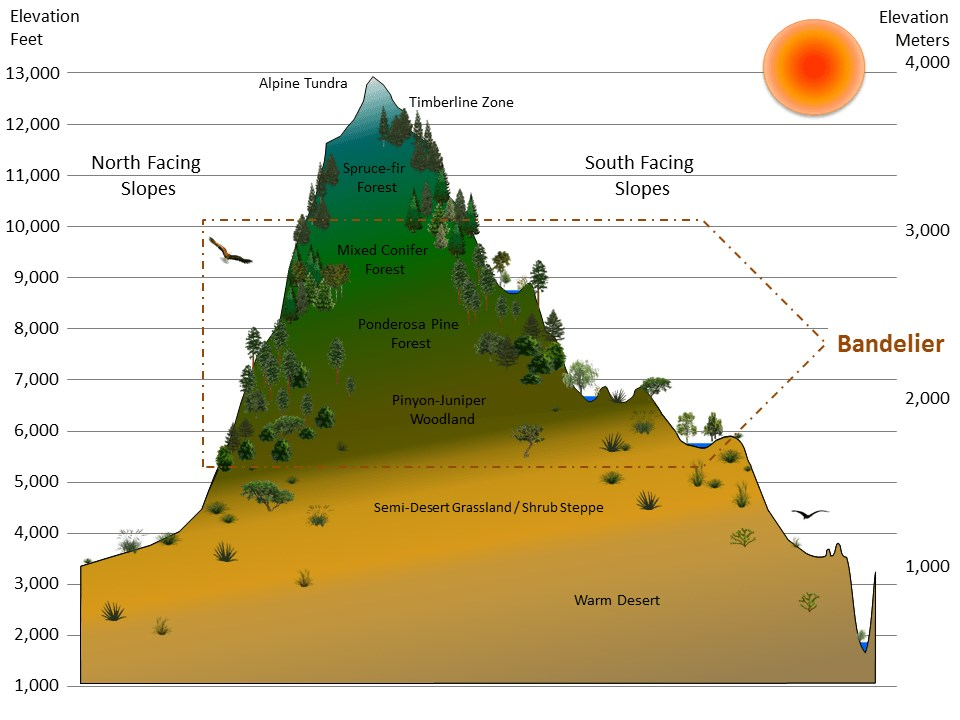 Graphic of a mountain divided into illustrated vegetation zones by elevation and exposure, with the elevations that correspond to Bandelier National Monument highlighted
