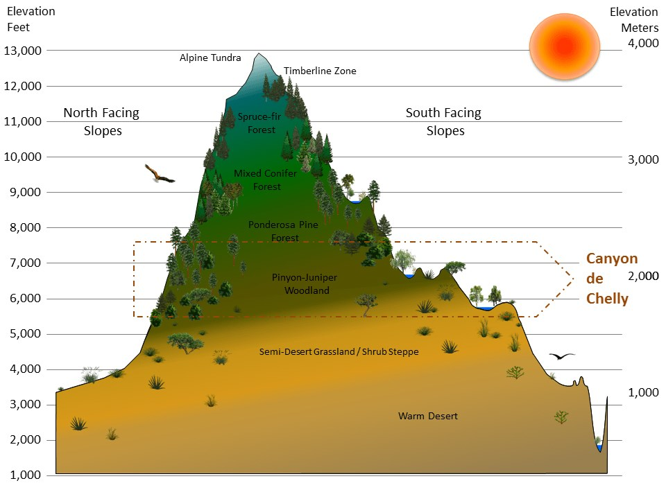Graphic of a mountain divided into zones by elevation