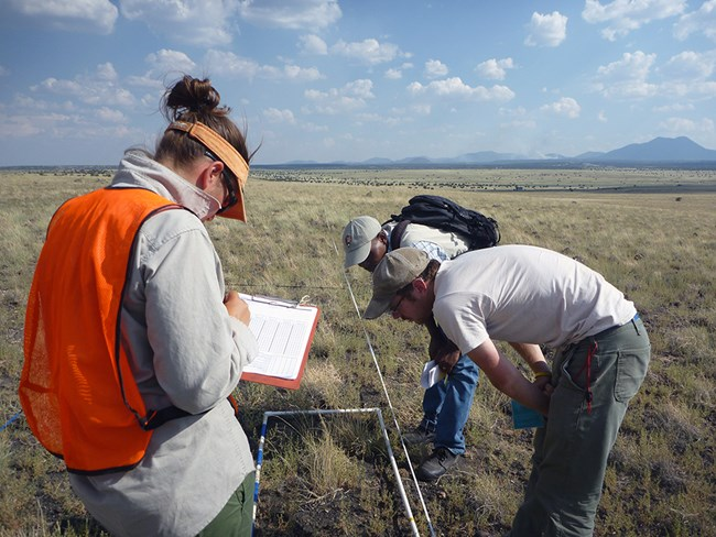 Two men and a woman examine an upland monitoring plot in an arid grassland ecosystem. The woman is writing in a data sheet.
